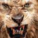 Wildlife - Zähne und Krallen