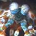 Bilder zur Sendung: Nasenmuräne und Zebrakrabbe - Jagdszenen am Meeresgrund