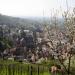 Heppenheim hautnah - Der Städtetrip