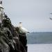Abenteuer Nordsee - Zwischen Killerwalen und Kegelrobben