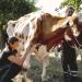 Ausgemolken! Bauern ohne Nutztiere - der neue Lebenshof
