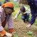 Wir werden Biobauern