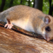 Im Wald der Kobolde - Siebenschläfer im Spessart
