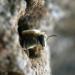 Die Bienenflüsterer - Mexiko - Die Biene der Maya