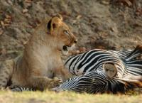 Safari-Paparazzi: Wildlife pur (3)