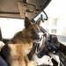 Tierisch Cool - Ein Hund in New York