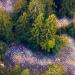 Bilder zur Sendung: Unsere Wälder - Die Sprache der Bäume