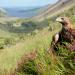 Ein Jahr in Irlands Natur
