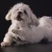 Bilder zur Sendung: Das geheime Leben unserer Haustiere (2/8)