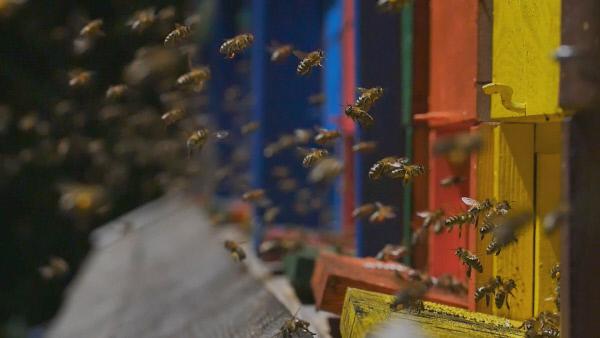 Bild 1 von 4: Die farbenfrohen Bienenstöcke sind Teil der slowenischen Tradition in der Bienenhaltung. Die verschiedenen Farben und Bemalungen helfen den Bienen dabei, zu ihrem Stock zurückzufinden.