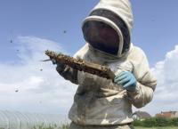 Der Wanderimker - Bienen für die Bauern
