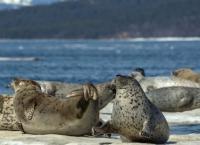 Wale, Robben, Riesenbären