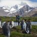 Insel der Pinguine - Südgeorgien