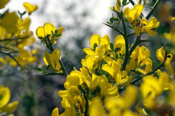 Bild 1 von 5: Die Wildblumen des Mittelmeerraums berühren alle Sinne mit ihrem Duft und ihrem faszinierenden Reichtum an Farben.