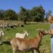 Die Ziegenlady