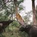 Safari-Paparazzi: Wildlife pur (1)