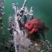 Abenteuer Nordsee - Unter Riesenhaien und Tintenfischen