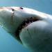 Bilder zur Sendung: Die Schöne und der Hai