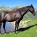 Bilder zur Sendung: Pferdeferien auf der Alp
