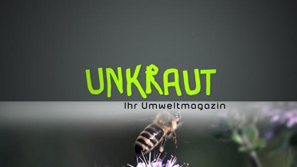 Bild 1 von 1: Unkraut
