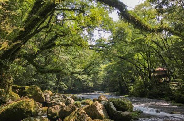 Bild 1 von 4: Die Vulkane sind umgeben von friedlichen Wiesen in sanftem Grün, Wäldern mit riesigen Bäumen und zahlreichen heißen Quellen.