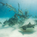 Bilder zur Sendung: Haie