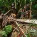 West-Papua - Mein Jahr bei den Korowai