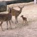 Abenteuer Schönbrunn - Tierbabys - die neue Generation