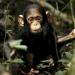 Mythos Kongo - Im Reich der Menschenaffen