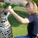 Ein Fläschchen für den Jaguar