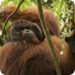 Bilder zur Sendung: Animal Rescue Borneo - Im Einsatz f�r die Tierwelt
