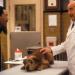 Dr. Dolittle