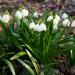 Bilder zur Sendung: Pielach - Im Garten der Voralpen