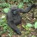 Gabun - Im Land der Gorillas