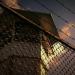 Verurteilt: Todesstrafe - Wettlauf gegen die Zeit