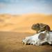 24 Stunden Wildnis - Jäger der Wüste