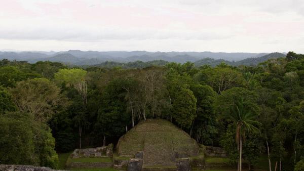 Bild 1 von 13: Mitten im Dschungel von Belize verbirgt sich die Ruinenstadt Caracol. Erst 1939 wurde sie durch Zufall entdeckt.