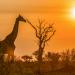 Wasserlöcher - Oasen für Afrikas Fauna
