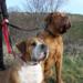 Bilder zur Sendung: Gef�hrliche Hunde? Bilanz der Rasselisten