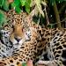 Leben mit dem Jaguar