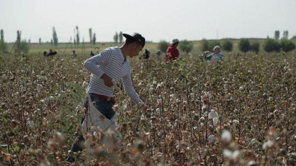 Bild 1 von 3: Auch die Europäische Union ist an den Missständen bei der Produktion von Baumwolle nicht unschuldig.