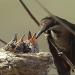 Brasiliens fliegende Edelsteine