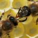 Unsere Bienen - Rettung in Sicht