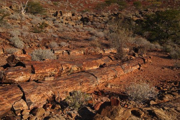 Bild 1 von 4: Beeindruckende Landschaft Namibias mit zum Teil versteinerten Bäumen