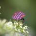 Wie geht es unseren Insekten?