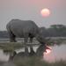 Bilder zur Sendung: Afrika - Der ungezähmte Kontinent