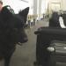 Bilder zur Sendung: Die Kontrolleure - Gepäckcheck am Flughafen
