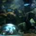 Das größte Aquarium Österreichs - Das Wiener Haus des Meeres