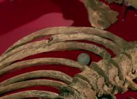Die Toten von Waterloo Auf den Spuren der Jahrhundertschlacht