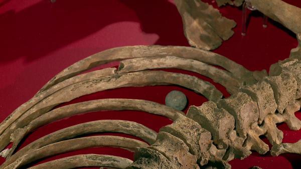 Bild 1 von 5: Skelettteil: Brustkorb mit runder Schrotkugel. Bei dem Skelett handelt es sich mit großer Wahrscheinlichkeit um das eines verbündeten Hannoveraners, vermutlich eines Infanteristen.